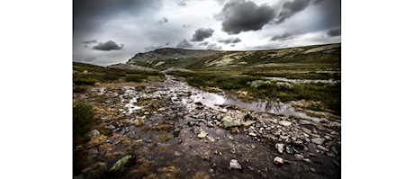 Christoph Ruthrof: Wildes Norwegen - Dovrefjell Nationalpark