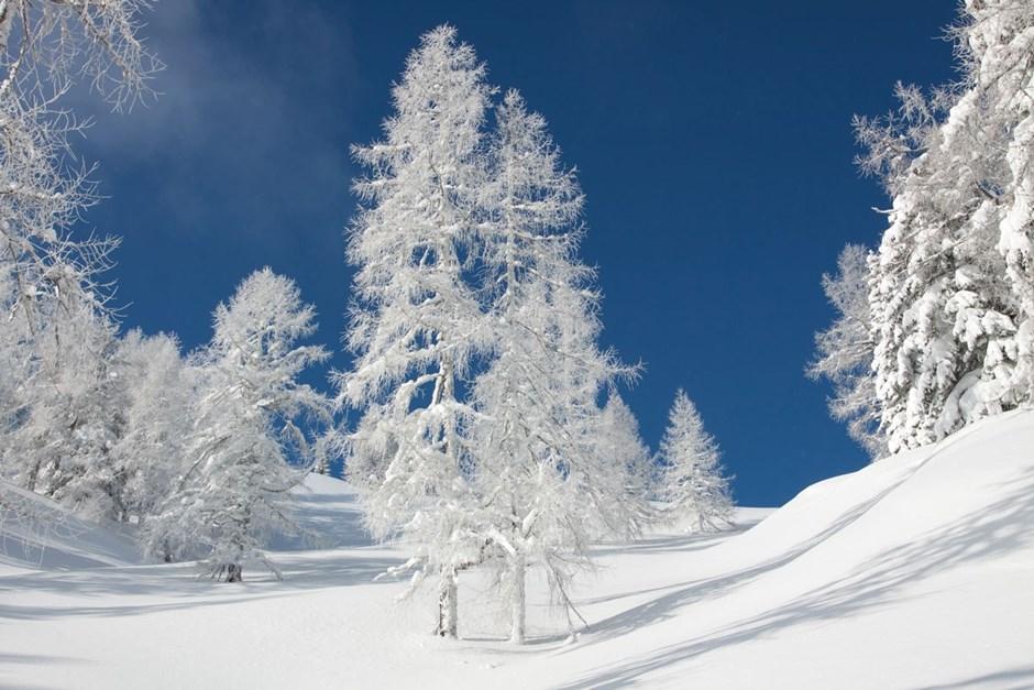 Februar - Winterweiß