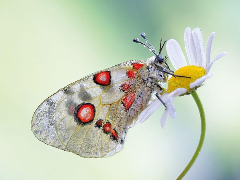 Mai - Blütendurst