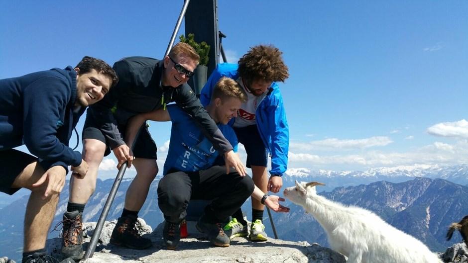 Neugierige Gipfelziege