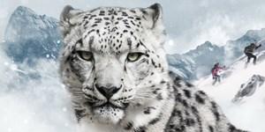 Snow Leopard Day: Tourengehen für eine gute Sache