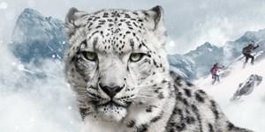 Snow Leopard Day: Skitouren für einen guten Zweck