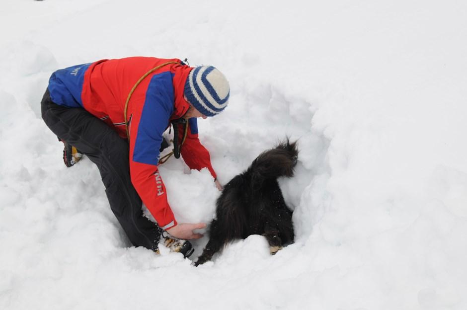 Bei der Vorführung der Bergrettung zeigen die Lawinenhunde was sie können