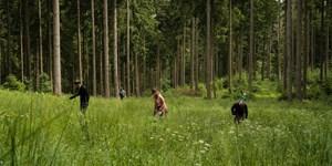 """""""Aktion Schutzwald"""" geht in die nächste Runde"""