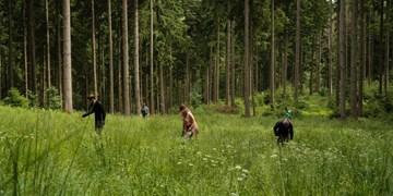 """DAV startet Kampagne """"Aktion Schutzwald"""""""