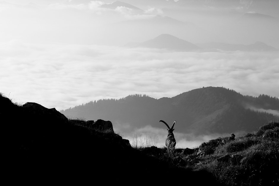 """Platz 4: """"Der König der Alpen"""""""