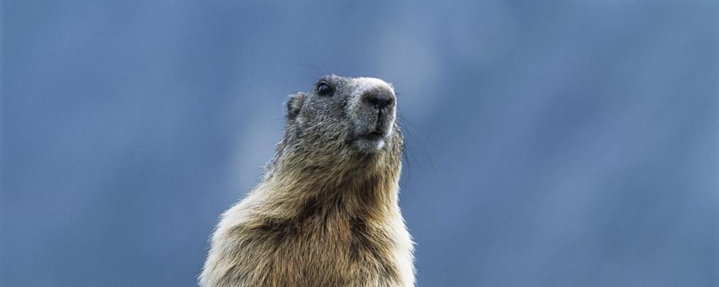 Die Alpen beherbergen viele verschiedene Tiere