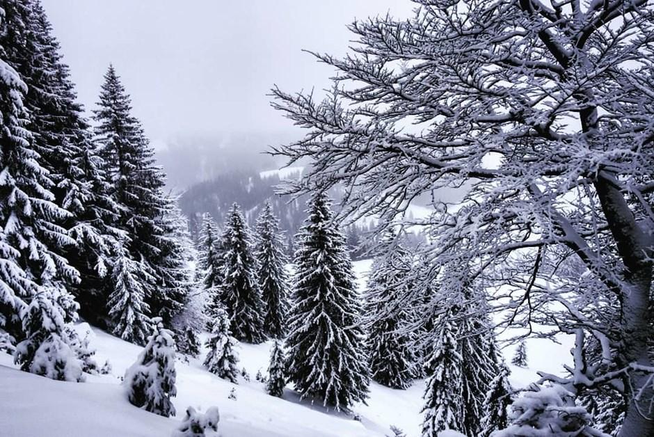 Winterwunderbäume