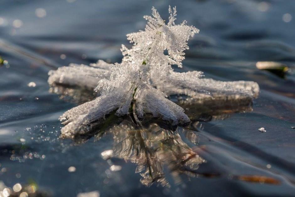 Eiskristalle auf Grashalm