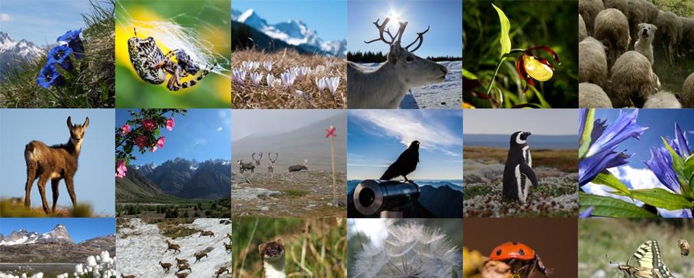 Alpin-Pics Fotowettbewerb