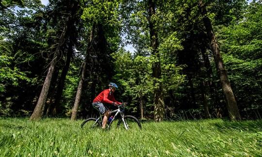 Tolles Trainingsgerät: Das Mountainbike.