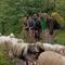 Dem Schafstrom ausweichen