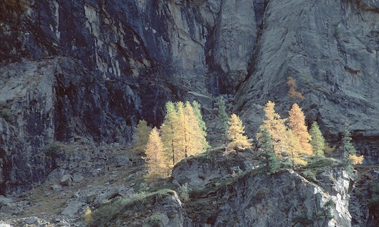 Gran Paradiso National Park im Herbst