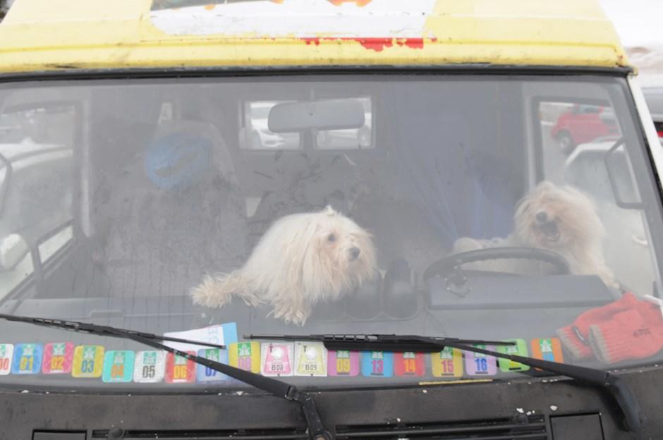 Ob diese beiden wohl auch Talent zum Lawinenhund hätten?
