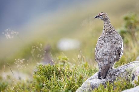 SchlauBERGer: Tierwelt der Alpen