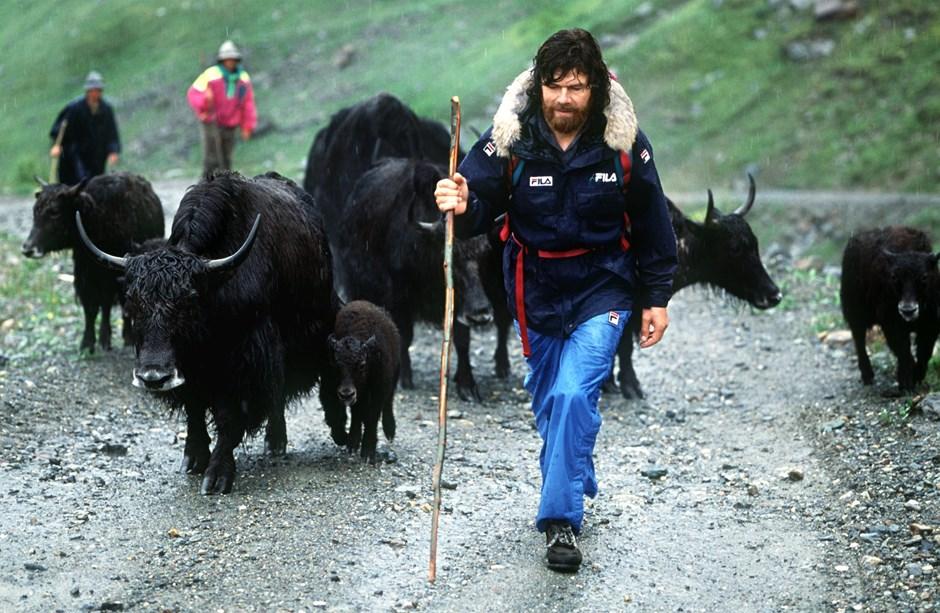 Messner mit Yaks