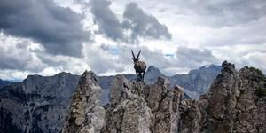 """Fotowettbewerb """"Tierische Bergbewohner"""":  Die Siegerbilder der User"""