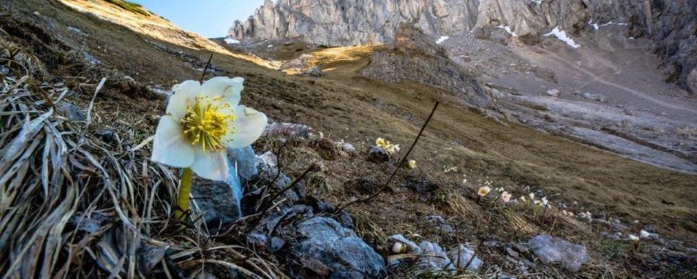 Fotowettbewerb Bergfrühling