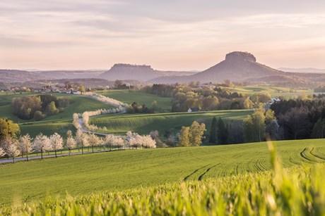 """Fotowettbewerb """"Endlich Frühling!"""": Die Siegerbilder der Jury"""