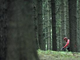 Öffnung der Forststraßen für Mountainbiker